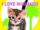 chat à miami