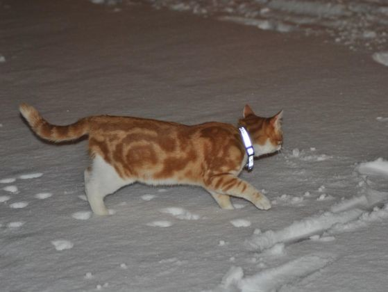 chat neige photo