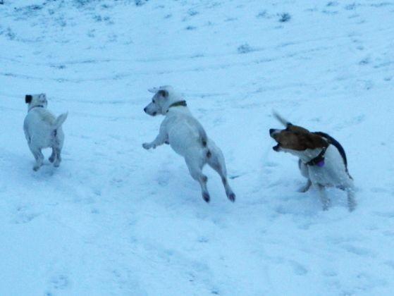 chien neige photo