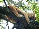 photo chat arbre