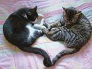 photo chat coeur saint valentin