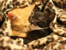 photos animaux chat saint valentin amour