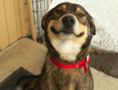 photo chien sourire