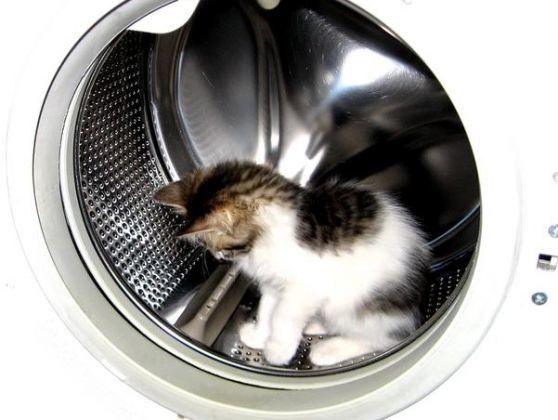 photo chat machine à laver