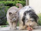 photo chat et chien