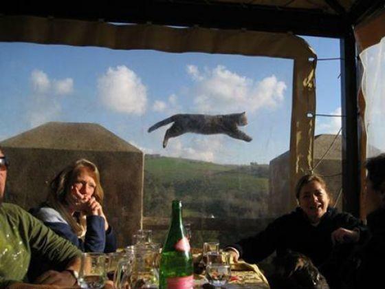 photos animaux chat photobombing