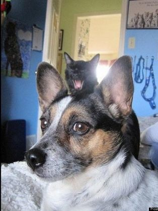 photos animaux chien chat photobombing