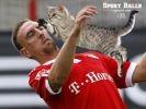 Des chats remplacent les ballons sur les terrains de sport