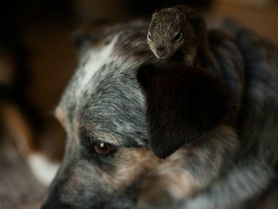 un écureuil orphelin adopté par des chiens