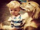 chien enfant amitié