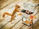 photos écureuil