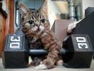 Lil bub chat star du web