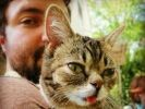 Lil bub chat star du web