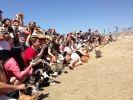 140 corgis réunis en californie