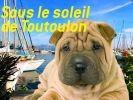 chien à toulon
