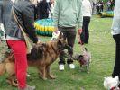 voyager avec son chien eurotunnel