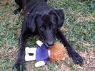 chien jouet peluche doudou