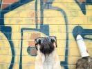 chien carlin