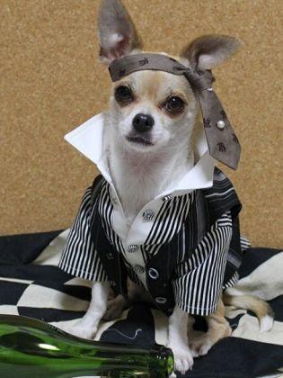 Montjiro, le chien le plus stylé du web