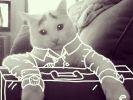 Elle dessine sur les photos de son chat