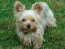Les 20 races de chiens les plus recherchées sur Google