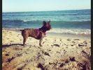 chien plage mer