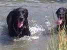 chien eau baignade