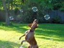 2 chien jouent