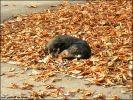 chiot automne
