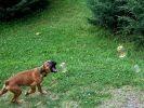 chien joue jardin photo