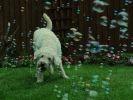 photo chien jardin bulles