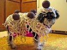 chien déguisement costume halloween
