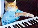 Keyboard Cat, chat star