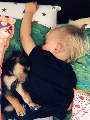 amitié enfant chien