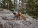 un chien et un renard devenus amis