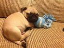 photo chien endormi
