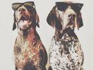 chien star, braque allemand