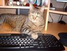 chat clavier bureau