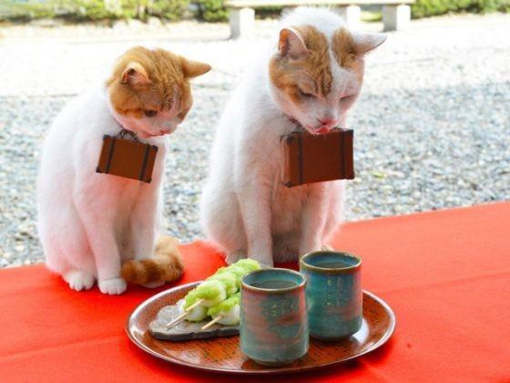 Bon app tit nyalan et deshi les chats guides - Bonne appetit en japonais ...