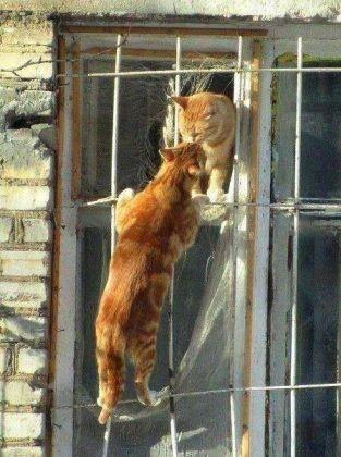 chats câlin
