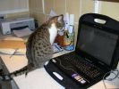 chat ordinateur portable