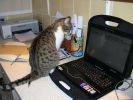 chat ordinateur portable