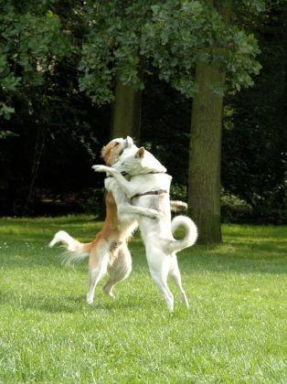 chien calin saint valentin