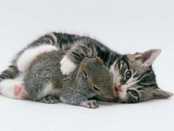 chat écureuil calin saint valentin
