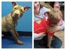 chien abandonné, adoption