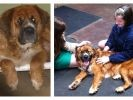 chien abandonné, adoption, sauvetage