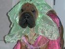 chien déguisé fleur