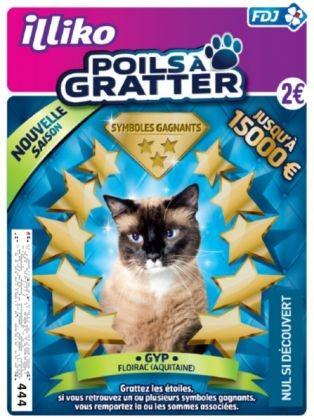 chat star, poils à gratter
