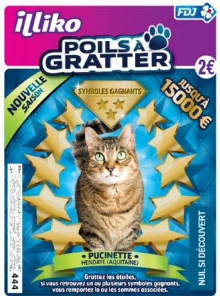 chat star, poils à gratter