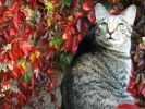 chat automne photo